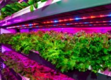 US$ 40 mn world's largest indoor farm to be built near Al Maktoum International Airport