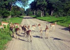 Egypt Housing Ministry presented with proposal to build US$ 1.1bn safari park