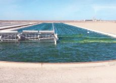 UK-based firm to develop one of the world's largest algae farms in Oman