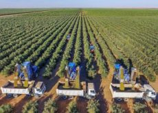 Gea wins deal to build 3,000ha olive oil mill in Saudi Arabia