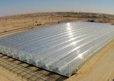 Oman to build four solar projects over next five years